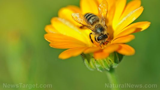 Bee-killing pesticides threaten the global food supply