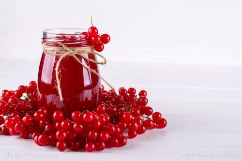 Cranberries improve oral health, study concludes