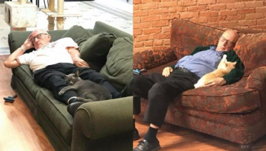 75-Year-Old Man Visits The Shelter Daily To Nap With Cats