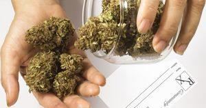 Health care professionals should 'screen for and address' prenatal cannabis use disorder