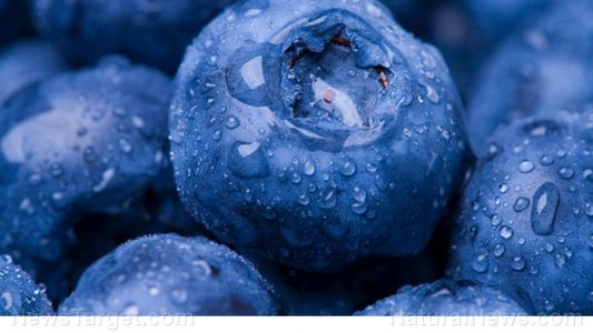 "Say goodbye to embarrassing ""senior moments"" by eating more blueberries, the superfood known to keep your brain young"