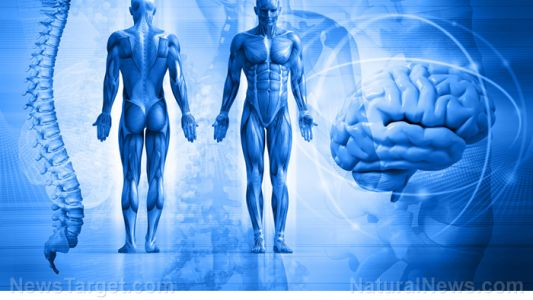 """Brains over body: Scientists say our brains are """"selfish"""" when it comes to energy"""