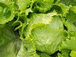 Superbug salad: Leafy green vegetables could carry antibiotic-resistant bacteria