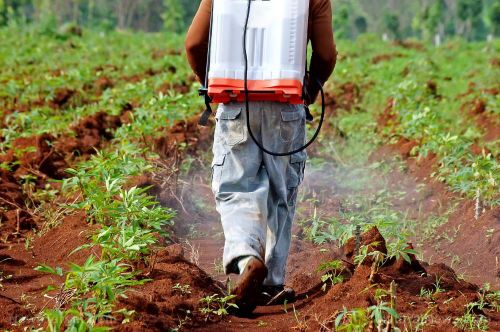 Watch where you spray: Study reveals high pesticide exposure is linked to olfactory impairment in aging farmers