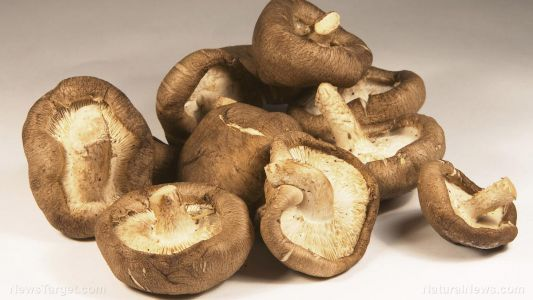 Mushrooms found to be a potent source of key antioxidants