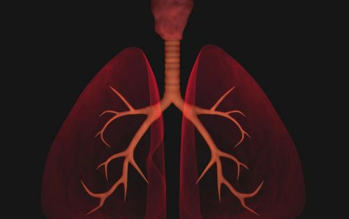 3D virtual reality video shows how rapidly coronavirus destroys the lungs