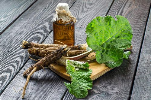 The versatile burdock root is a powerful blood purifier and diuretic