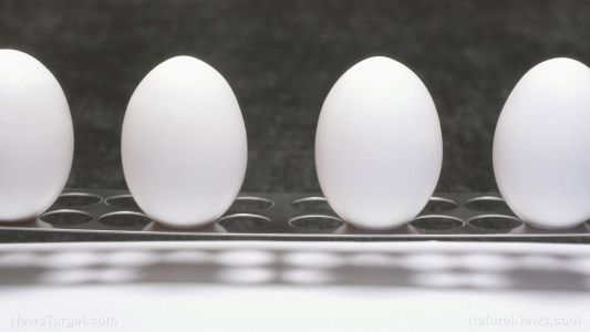 Eating eggs several times a week can be good for people with diabetes - study
