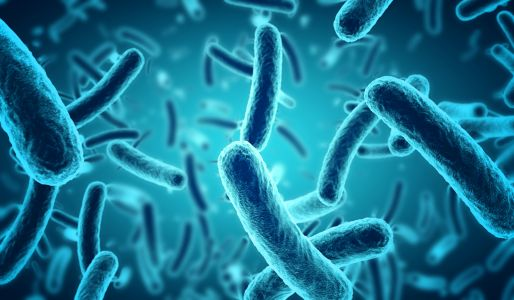 Researchers discover gut bacteria linked to lower cholesterol
