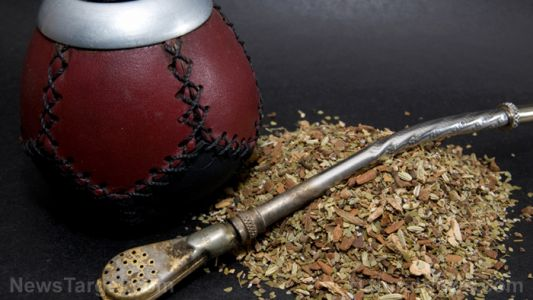 Long-term consumption of yerba mate found to strengthen your digestive system