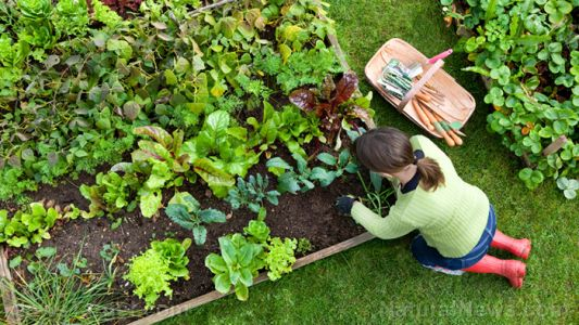 19 Chemical-free ways to get rid of weeds in your home garden