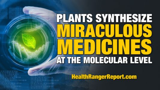 Health Ranger: Plants synthesize miraculous medicines at the molecular level