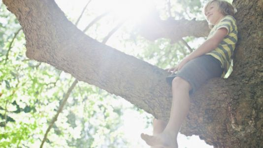 Climbing Trees Is Safer Than Organized Sports