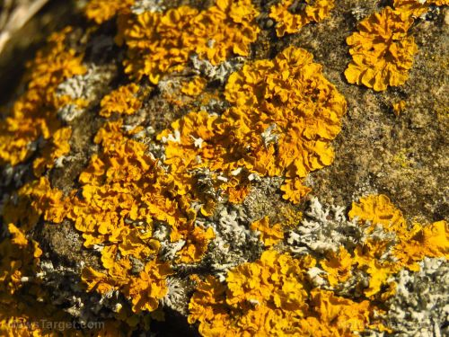 Japanese researchers discover novel enzyme from soil fungus that can be used for industrial purposes
