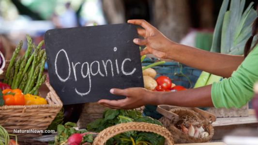 Market for organic products continues to expand as consumers ditch unhealthy products