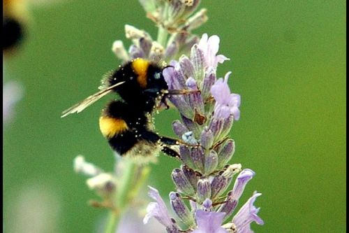 Met Office explains why hay fever is so bad this year