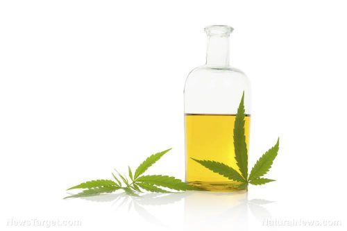 Topical uses for marijuana: Study finds it effective at soothing skin problems such as eczema, psoriasis