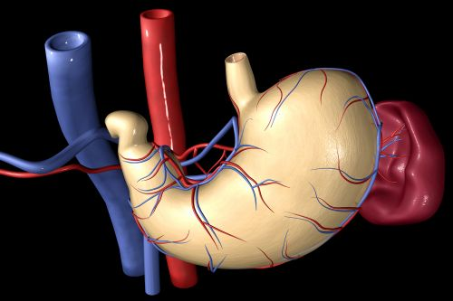 Weight-Loss Surgery a Boon for the Heart