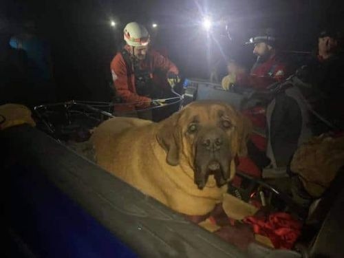 A Very Good, Big Boy Had To Be Rescued On A Hike And The Photos Are Everything
