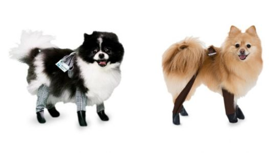There Are Leggings For Dogs Now And We're Screaming