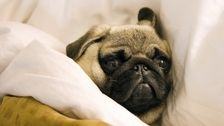 Psychologists Are Trying To Figure Out Why We Don't Go To Sleep
