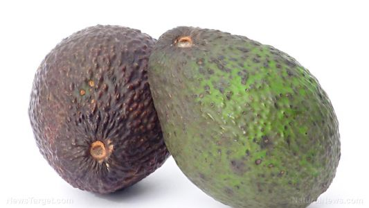 Not just for guacamole: Man robs two banks using an avocado. and nearly gets away with it