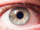 Glaucoma: New blood test 15 TIMES more likely to identify high-risk people before vision loss