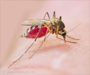 Researchers Uncover New Effective Drug to Fight Malaria