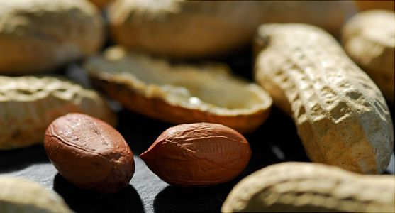 FDA to Assess First Peanut Allergy Drug