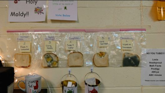 Teacher's Genius Bread Experiment Shows Why Hand-Washing Matters