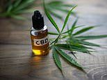 Could cannabis oil combat antibiotic resistance? CBD 'boost effectiveness of the drugs'