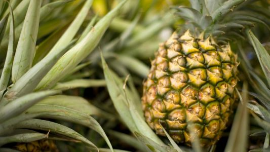 Heal Your Pain with Bromelain