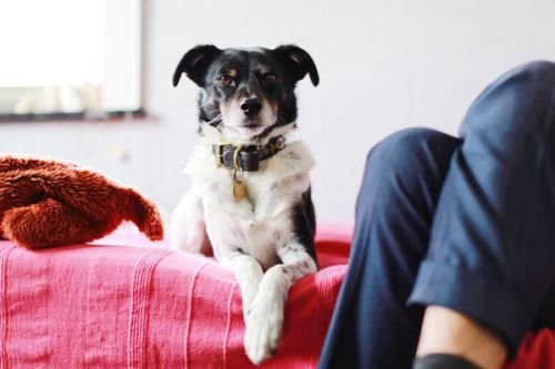 Rescuing My Dog Rescued Me From Depression
