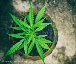 Link Between Cannabis Use in Pregnancy and Autism Risk