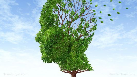 One of nature's best kept secrets: Elya leaves reduce brain damage linked to Alzheimer's
