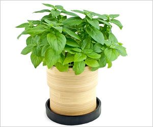 Houseplants Could One Day Monitor Home Health: Study