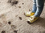 Wearing dirty shoes indoors 'could protect children from asthma'