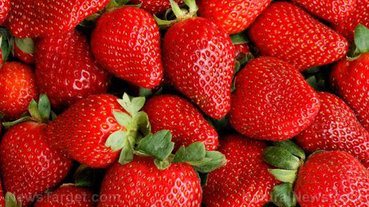 Strawberries found to reduce inflammation and prevent cognitive decline