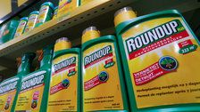 Chemical Giant Monsanto Ordered To Pay $289 Million In Roundup Cancer Trial