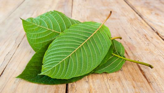 Kratom Tea vs. Matcha: Know The Differences And Similarities