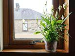 Houseplants can boost health by improving air quality, study finds
