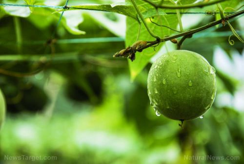 Enhanced stem cell function from monk fruit produces anti-aging effects